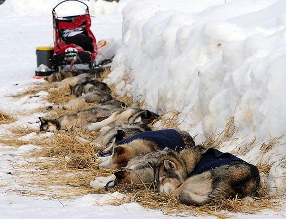 The 2013 Iditarod Trail Sled Dog Race | US News