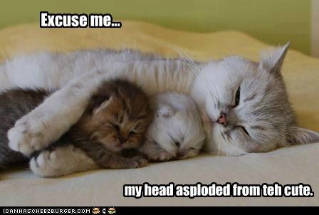 Lolcats: Excuse me...