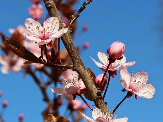 Signes Vals: Lyserøde perlehyacinter og meget mere