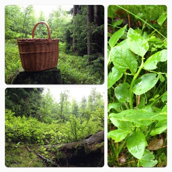 User: kristintarbilder#skog   #tur   #visitnorway Likes::   http://instagr.am/p/MyFHMDAnIy/