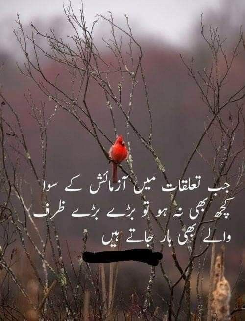 Pin By Malang Khan On Poetry Deep Words Urdu Quotes Heartfelt Quotes