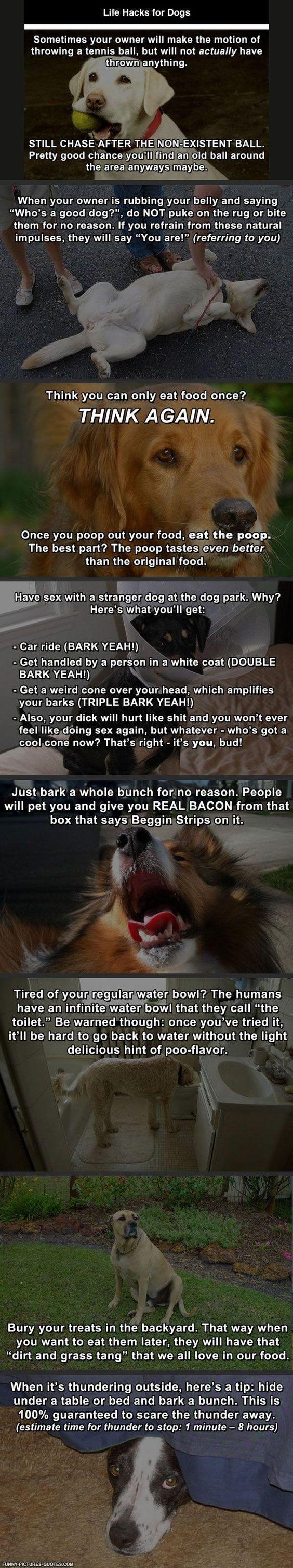 Good advices for a dog