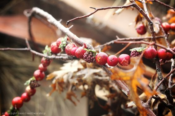 cranberrygarland