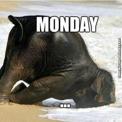 This is Monday. Have fun the rest of your week , take a Limo out and enjoy life. Bay-Limo.com