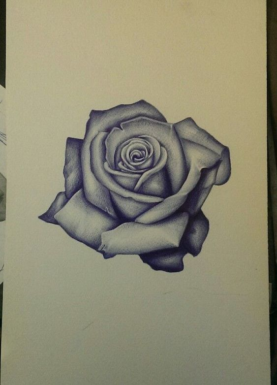 Realism rose sketch. Art, flower, tattoo, drawing, follow on instagram @rudyta2: