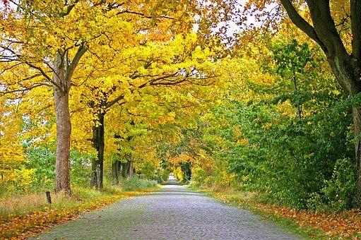 Musim Gugur Avenue Pohon Jauh Jalan Latar Belakang Foto Alam Pemandangan