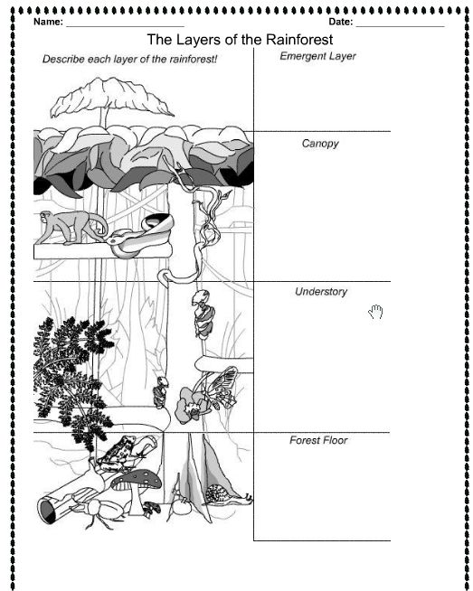Worksheets Layers Of The Rainforest Worksheet rainforests on pinterest rainforest layers printable