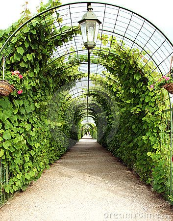 .: Garden Ideas, Arbors Trellis Tunnels,  Glasshouse, Side Yard, Gardening Ideas, Garden Arches, Arbor Tunnel, Grapevine Arch