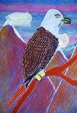 Bald Eagle/ John James Audubon/ 5th Grade