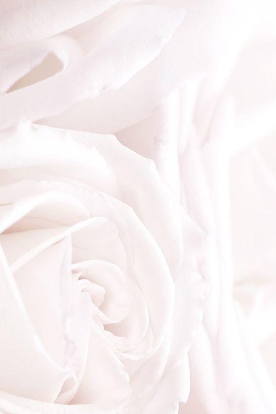 White Roses Phone Iphone Wallpaper Background Lock Screen