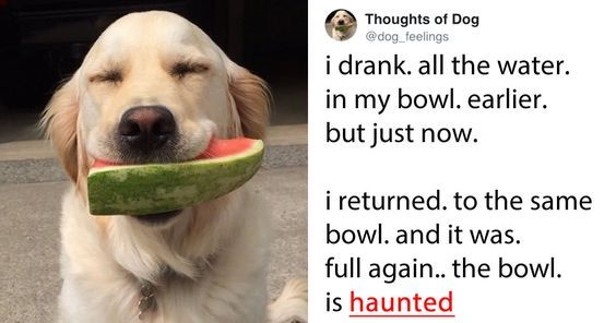 22 Of Best Thoughts Of Dogs From The Thoughts Of A Dog Dog