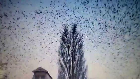 Revoada de pássaros abandonando árvore.