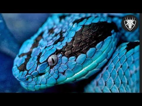 Top 10 Cobras Mais Venenosas Do Mundo Youtube Papel De Parede