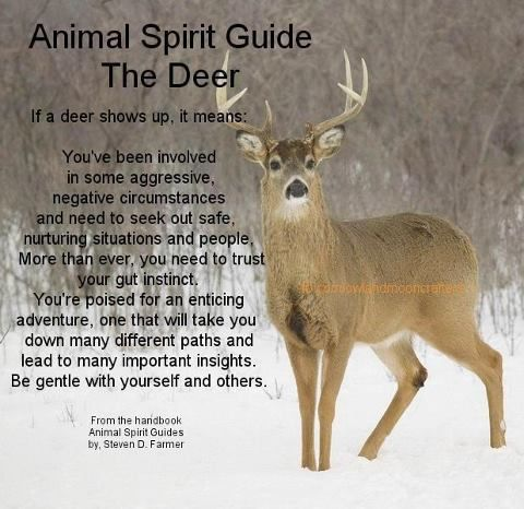 (DEER) Interesting! So Much Truth Behind This... and the incidences of encounters with these creatures! Hmm...