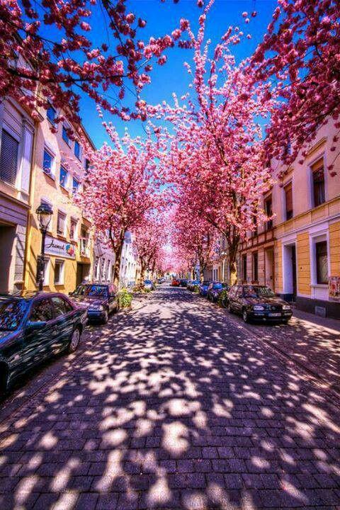 Bonn Altstadt #Reise