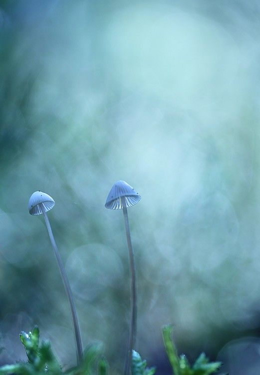 blue light.  By H. Bosveld.