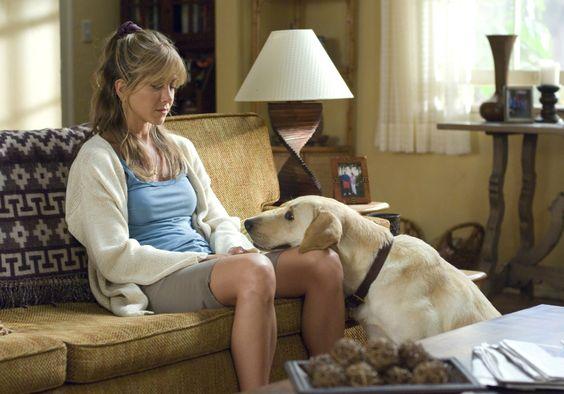 Sabe o que acontece com o coração do seu cachorro quando vocês se encontram?
