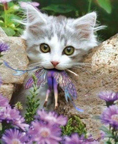 Kitten Eating A Fairy Kittens Cutest Cute Cats Cats