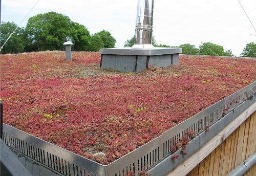 Toiture Vegetalisee D Une Habitation En Conteneurs Toit Vegetal