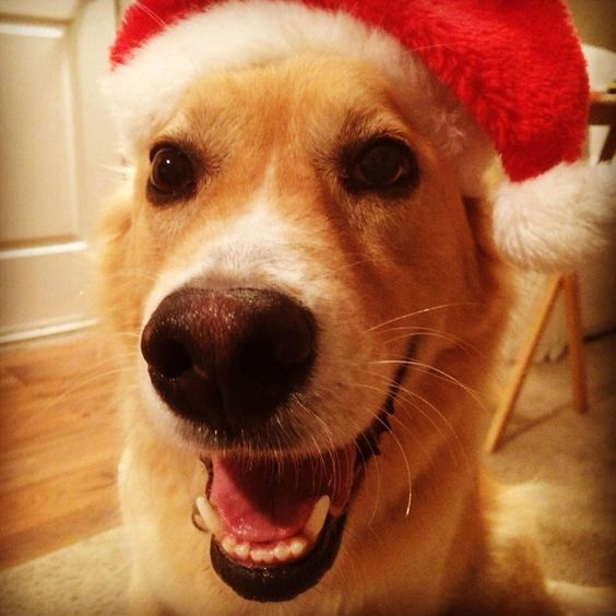 Merry Christmas from Bear!