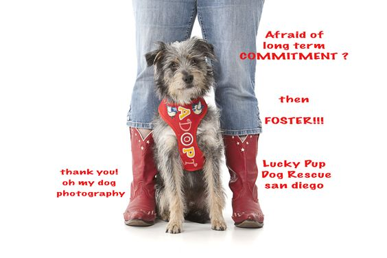 THINK ABOUT FOSTERING IN SAN DIEGO CALIFORNIA.  help save a life.  long term fosters needed for all kinds of rescued, orphaned pups!   www.LuckyPupDogRescue.com xoxo christine and steve