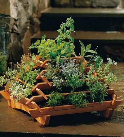 Pyramid planter for herbs: