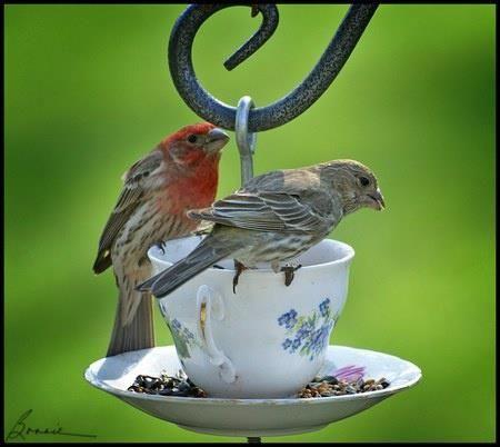 Comedouro e bebedouro para pasáros com xícara e pires. Parafusar um no outro com um gancho. Na xícara colocar água e sementes no pires.