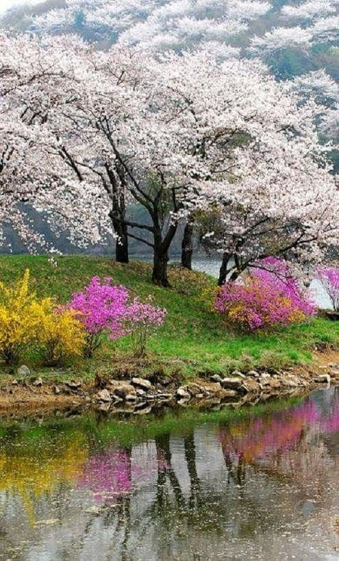 How Great Thou Art God The Colors Of Spring Make Me Happy Nature Photography Beautiful Landscapes Landscape Photography