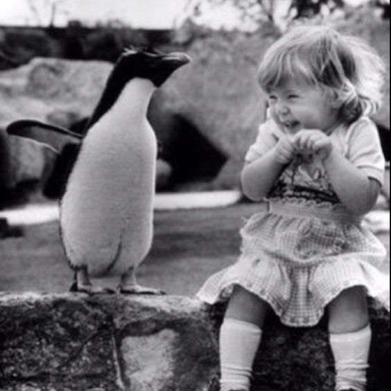 I'm sure I'll react the same way when I meet my first penguin...