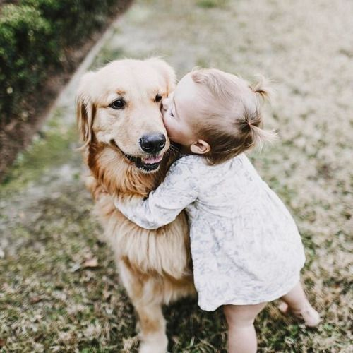 Golden Retriever kisses! How sweet!