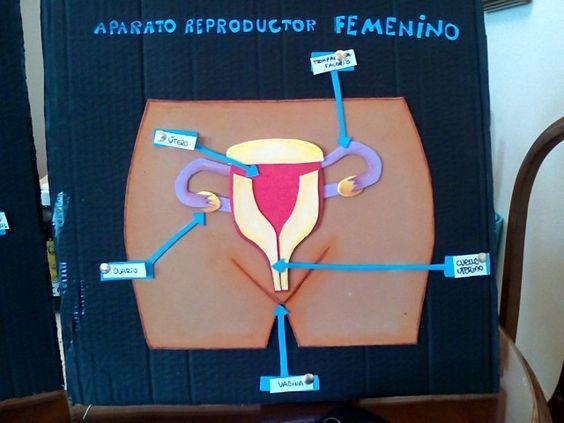 Aparato reproductor femenino manualidades pinterest for Cuadros para poner fotos
