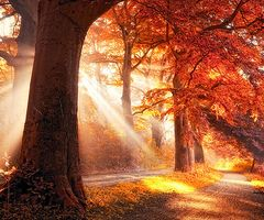 Light through the trees: Favorite Places, Nature, Autumn Fall, Beautiful Places, Sunray, De Goor, Sun Rays, Fall Color