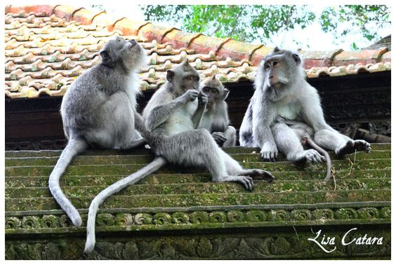 #Bali #Indonesia #Ubud  #photography #travel #Vacation #placestosee #animals #temples #monkeys #creativity #creative #Actress #Lisa Catara #inspiration #Travel #Beautiful #culture #happy #picoftheday #Love #follow #me #like #photooftheday #Instagram