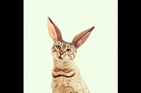 Dilok Lak, o ano das orelhas de coelho   P3