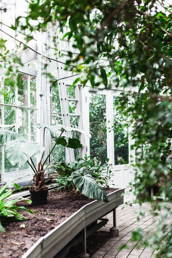 copenhagen, palmhuset botaniska: