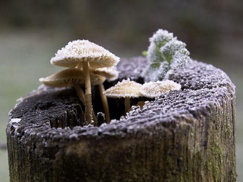 mushrooms   Tumblr