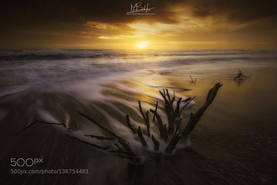 """""""Between the Branches"""" by MarcoBentivoglio. Please Like http://fb.me/go4photos and Follow @go4fotos Thank You. :-)"""