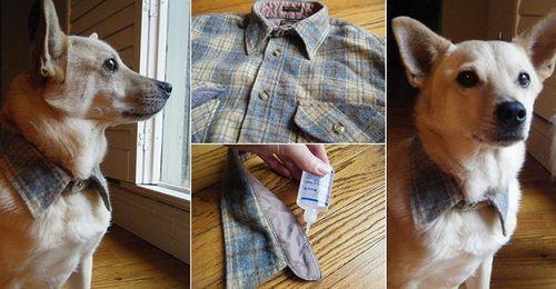 süsses Halsband für den Hund