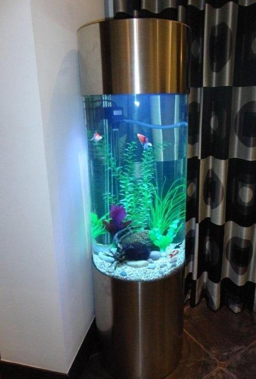 explore aquarium inspo aquarium s and more seahorses aquarium columns ...