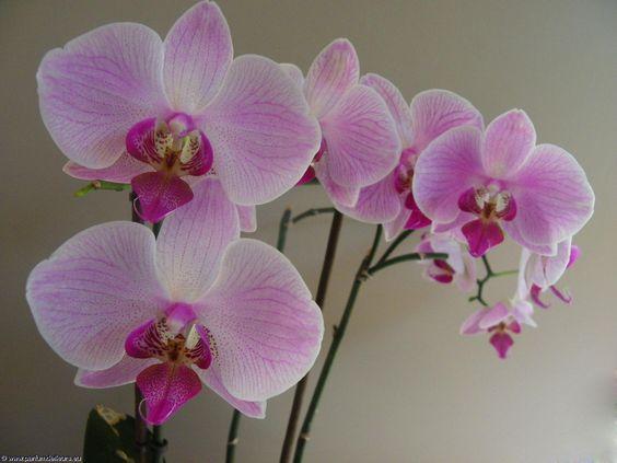 Belles orchid es fleurs orchid es photo hd et fond d for Belle image fond ecran