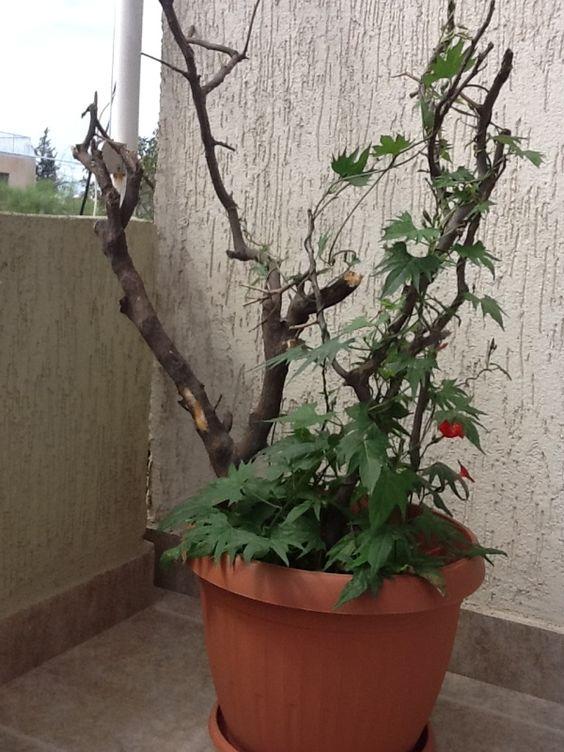 From My bkn   garden