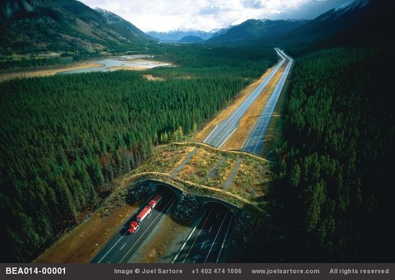 Wildlife overpass near Banff National Park, combined with fencing that leads animals to it, is designed to give wildlife a way to cross over the interstate. It is now thought that underpasses work better for skittish animals too shy to cross out in the open. Alberta, Canada