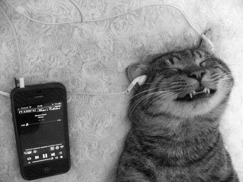 O que será que o gato está a ouvir :)  http://www.vida-e-prazer.com