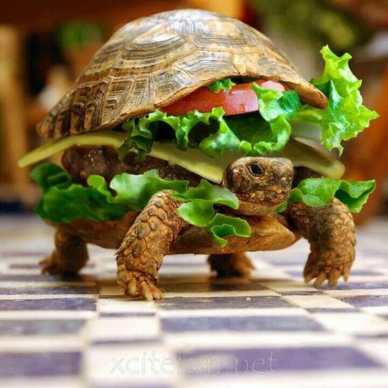 Turttle Hambúrguer