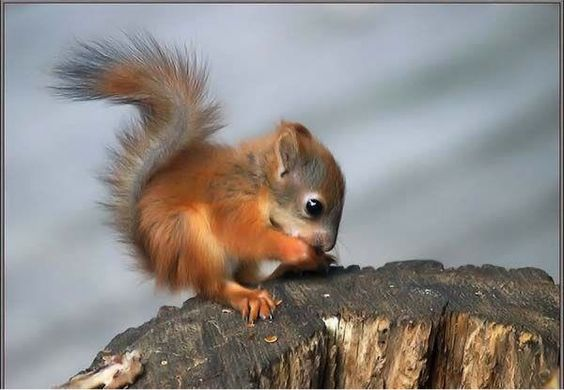 ok, how cute it this little guy!