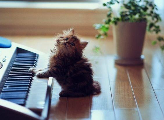 ¡Me Divierto Tocando El Piano!