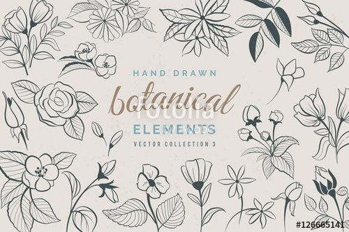 Vektor: Botanical Hand Drawn Elements