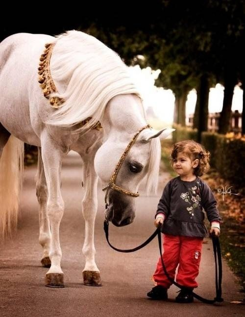 Забележете очите на уважение коня са по-ниски, отколкото очите лидерите ...: