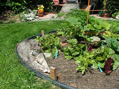 Organic Art Garden Circles