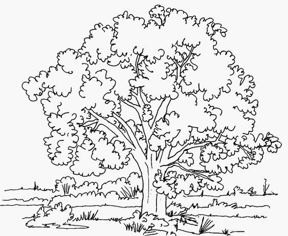 Ausmalbilder Malvorlagen Baum Kostenlos Zum Ausdrucken Marchen Aus Aller Welt Der Bruder Grimm Von Andersen Malbuch Vorlagen Malvorlagen Baume Zeichnen